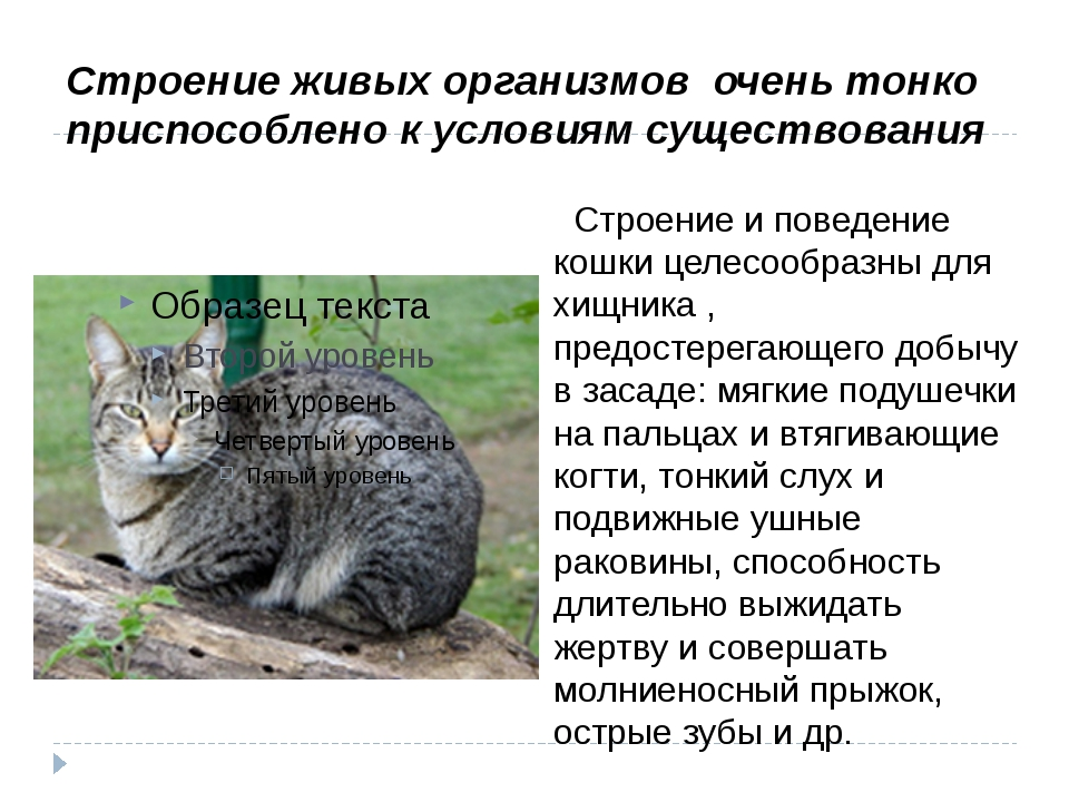 Строение и поведение кошки целесообразны для хищника , предостерегающего доб...