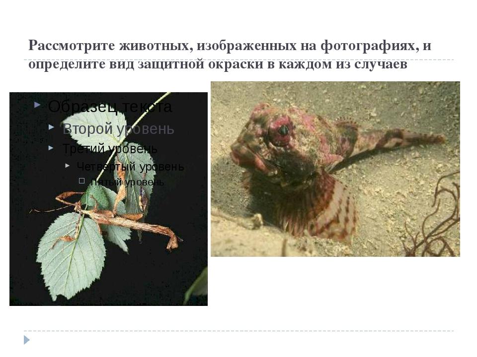 Рассмотрите животных, изображенных на фотографиях, и определите вид защитной...