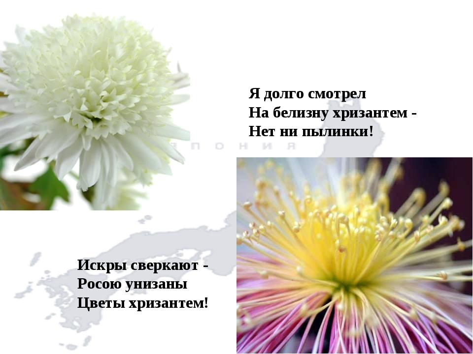 Я долго смотрел На белизну хризантем - Нет ни пылинки! Искры сверкают - Росою...