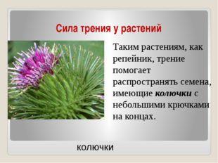 Сила трения у растений Таким растениям, как репейник, трение помогает распрос