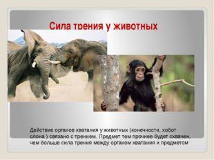 Сила трения у животных Действие органов хватания у животных (конечности, хобо