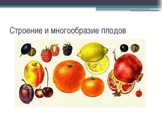 Строение и многообразие плодов