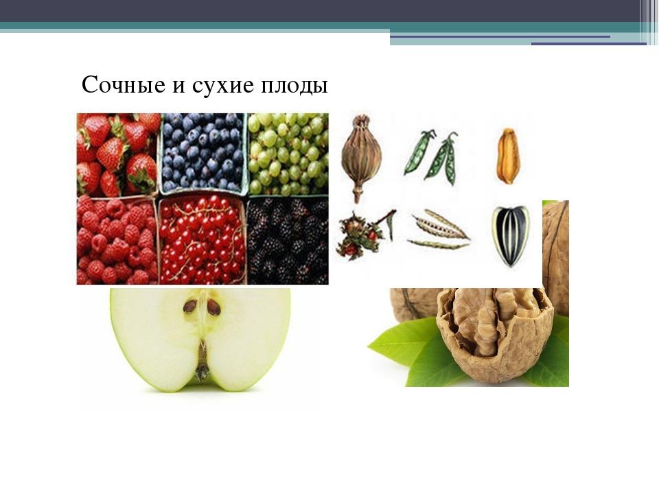 Сочные и сухие плоды