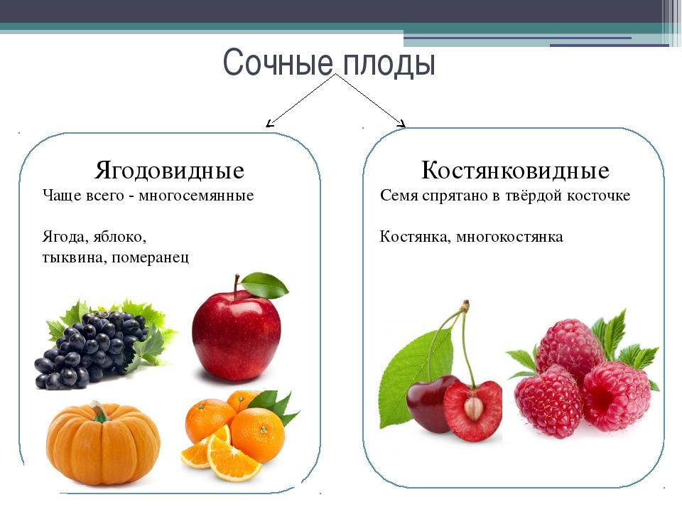 Сочные плоды Ягодовидные Чаще всего - многосемянные Ягода, яблоко, тыквина, п...