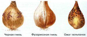 http://beauty.m.at-its.com/uploads/posts/2012-12-13/fuzarioznaja-gnil-donca-luka_1.jpg