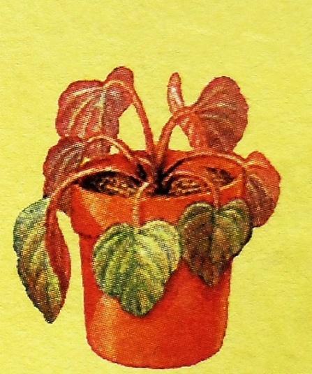 Гниль-стеблей-болезнь-комнатных-растений.jpg