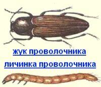http://www.letniidom.com/images/stories/poleznzametki/provolochnik.jpg