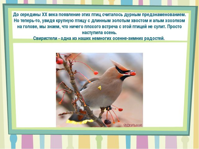 До середины XX века появление этих птиц считалось дурным предзнаменованием. Н...