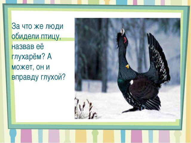 За что же люди обидели птицу, назвав её глухарём? А может, он и вправду глухой?