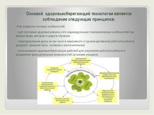 Основой здоровьесберегающей технологии является соблюдение следующих принцип
