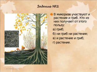 * * В микоризе участвуют и растение и гриб. Кто из них получает от этого поль