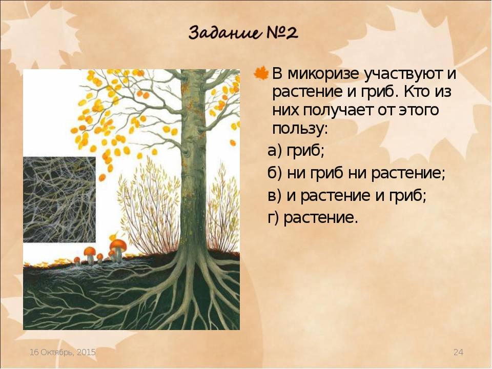 * * В микоризе участвуют и растение и гриб. Кто из них получает от этого поль...
