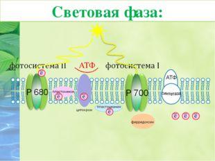 6. Молекула хлорофилла П680 фотосистемы II восстанавливает свой электрон за с