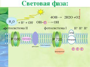 Ионы гидроксильной группы отдают свои электроны, превращаясь в радикалы: ОН-
