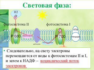 Таким образом, энергия солнечного света порождает три процесса: 1) Образовани