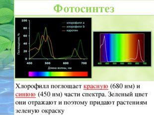 Хлорофилл поглощает красную (680 нм) и синюю (450 нм) части спектра. Зеленый