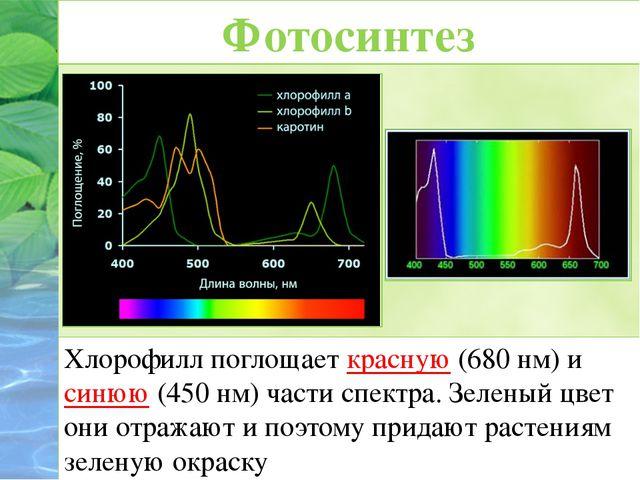 Хлорофилл поглощает красную (680 нм) и синюю (450 нм) части спектра. Зеленый...