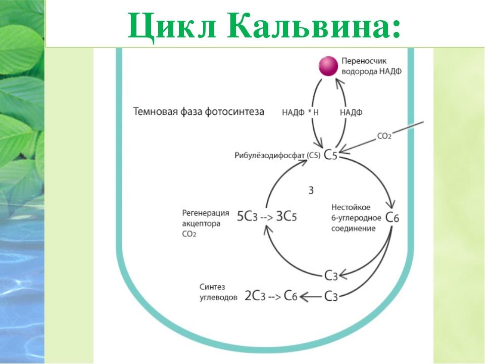 Хемосинтез – это образование органических веществ из неорганических веществ з...