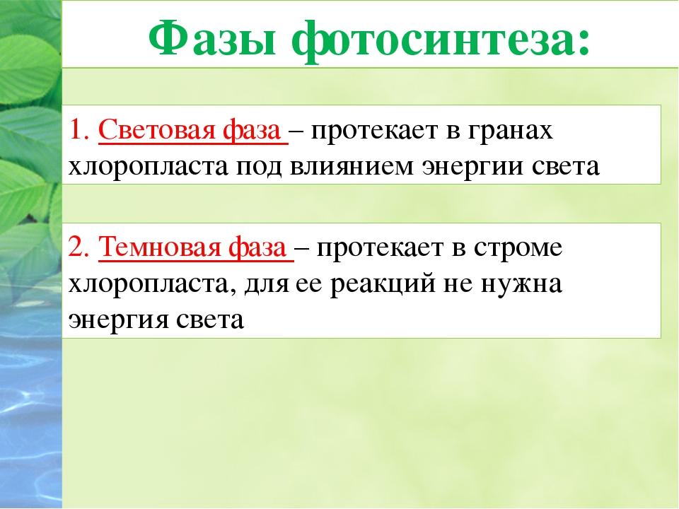 Фазы фотосинтеза: 1. Световая фаза – протекает в гранах хлоропласта под влиян...