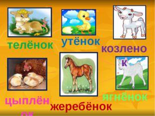 телёнок утёнок козленок цыплёнок жеребёнок ягнёнок