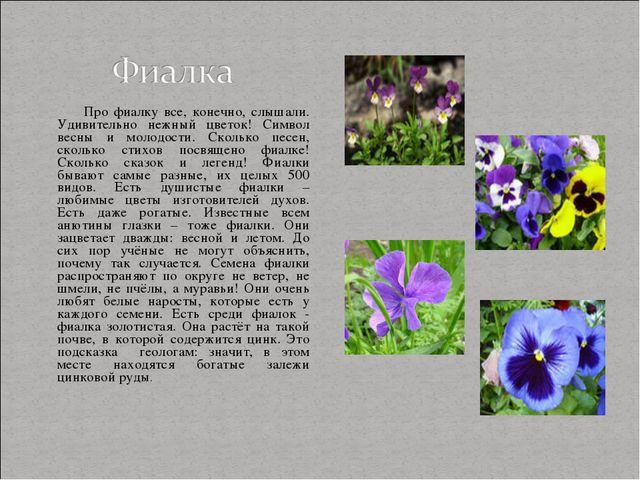 Про фиалку все, конечно, слышали. Удивительно нежный цветок! Символ весны и...