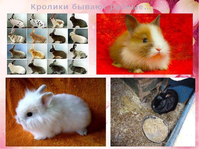 Кролики бывают разные…