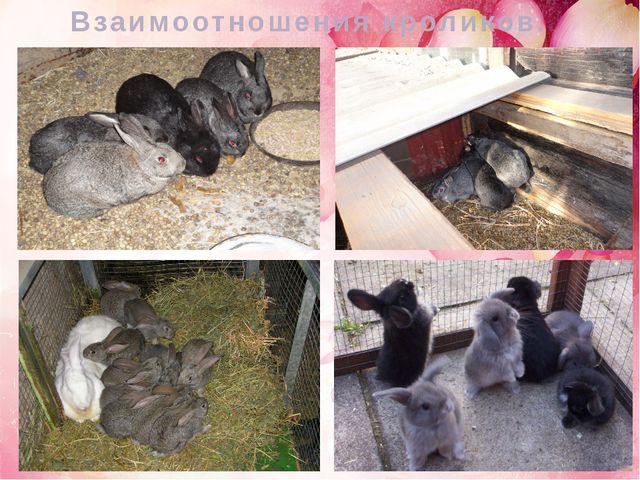 Взаимоотношения кроликов.