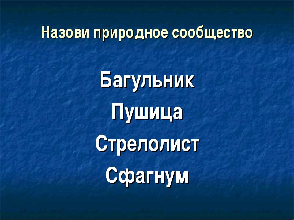 Назови природное сообщество Багульник Пушица Стрелолист Сфагнум