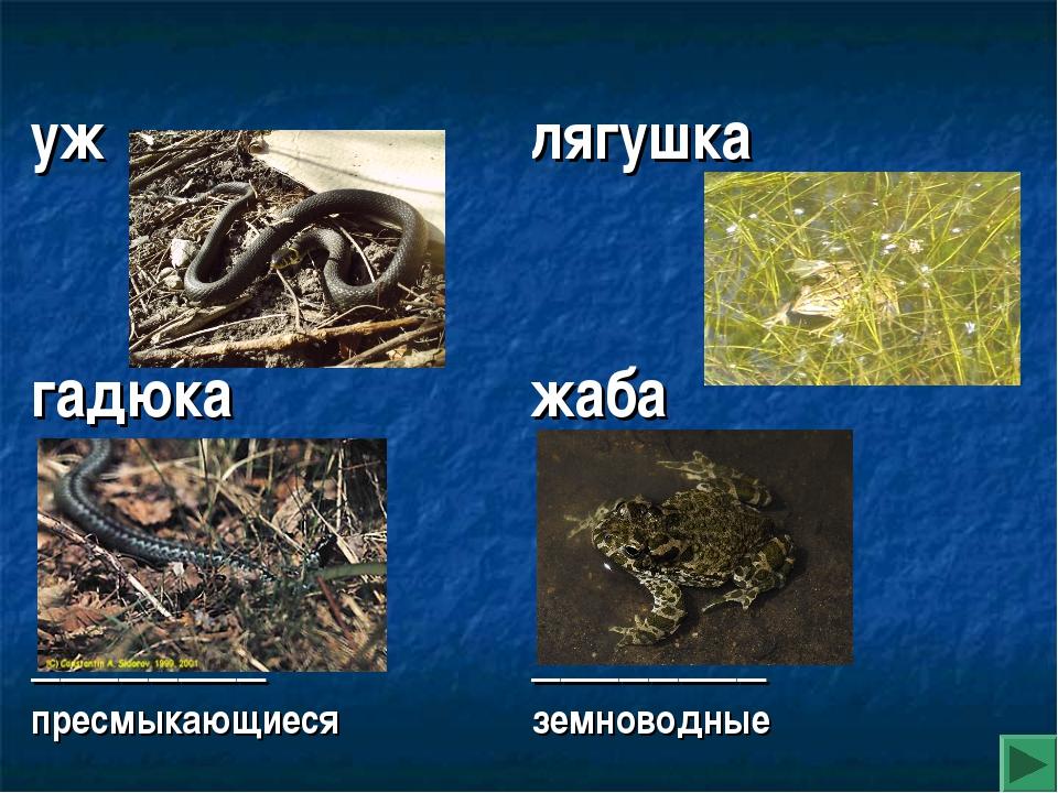 уж гадюка ________ пресмыкающиеся лягушка жаба ________ земноводные