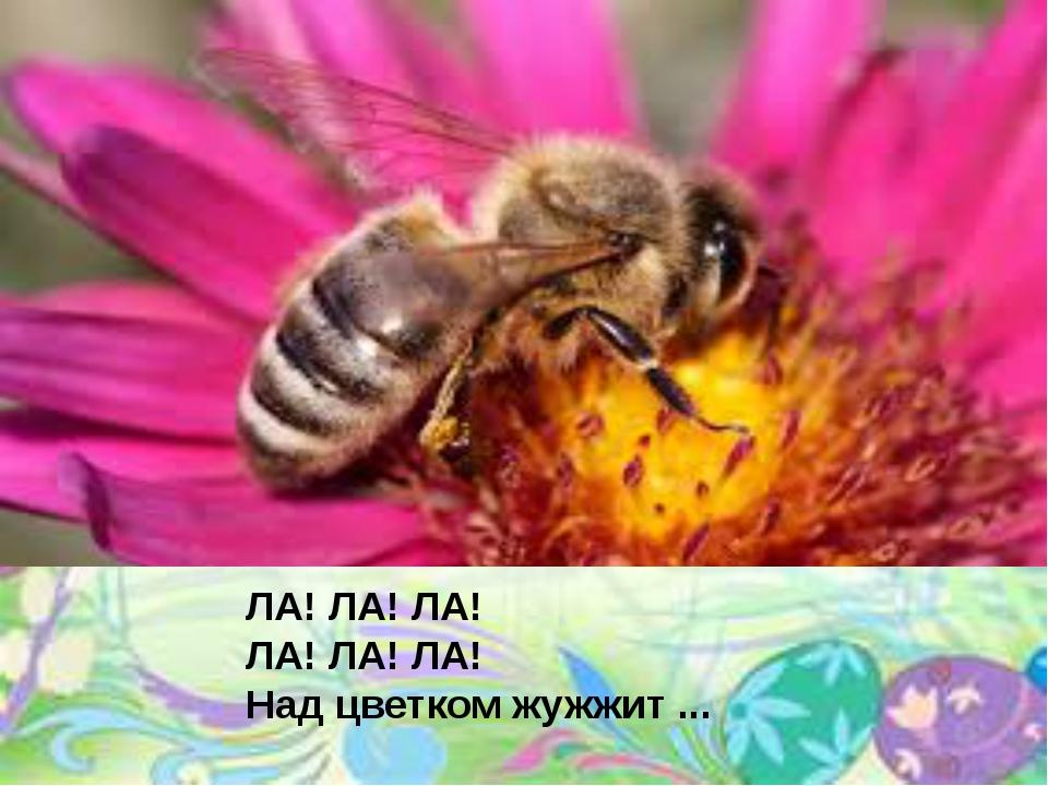 ЛА! ЛА! ЛА! ЛА! ЛА! ЛА! Над цветком жужжит ...