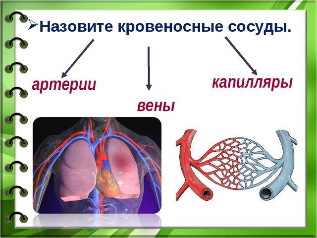 Назовите кровеносные сосуды. артерии вены капилляры