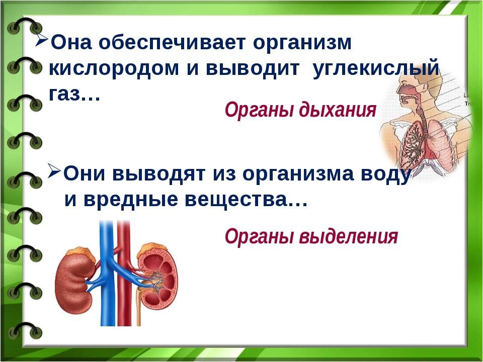 Она обеспечивает организм кислородом и выводит углекислый газ… Органы дыхания...