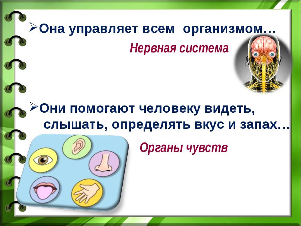 Она управляет всем организмом… Нервная система Они помогают человеку видеть,...