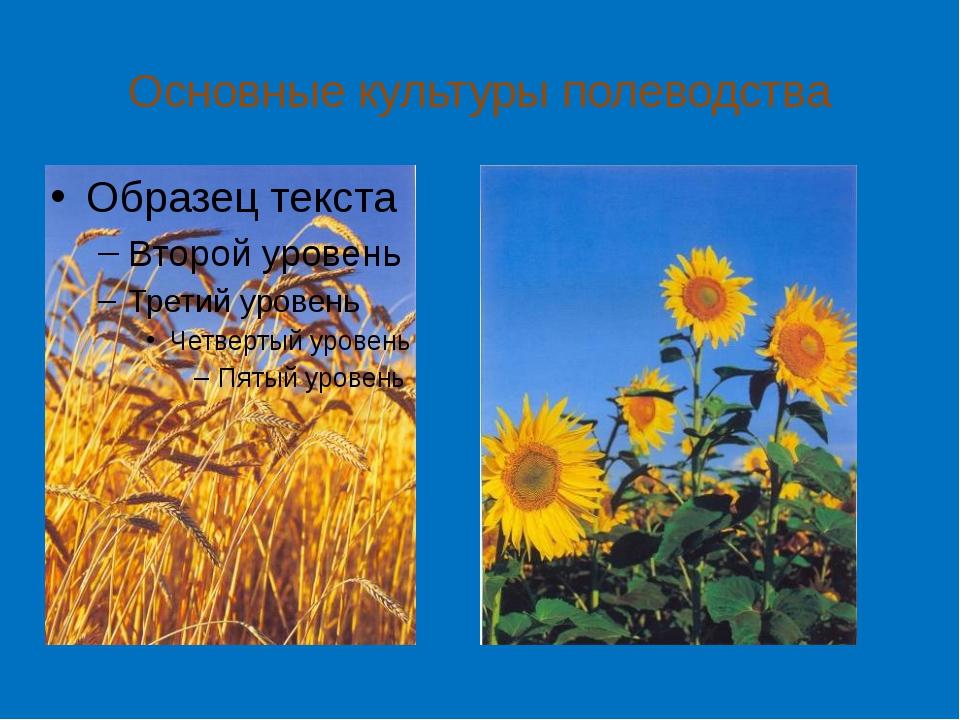 Основные культуры полеводства