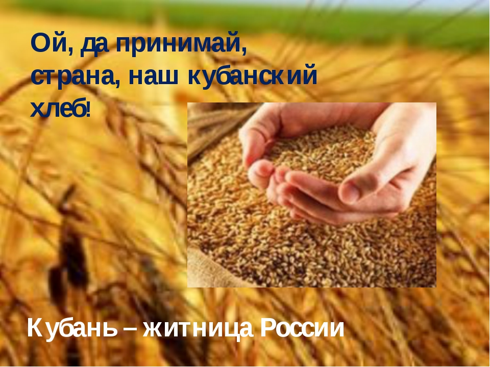 Ой, да принимай, страна, наш кубанский хлеб! Кубань – житница России