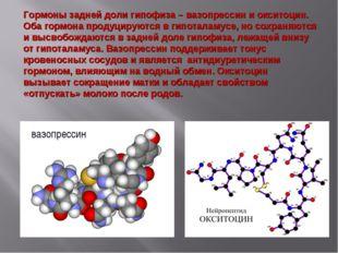 вазопрессин Гормоны задней доли гипофиза – вазопрессин и окситоцин. Оба гормо