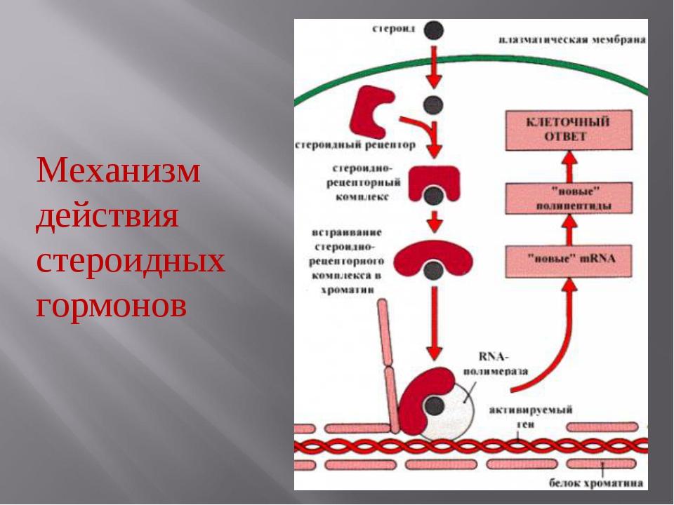 Механизм действия стероидных гормонов