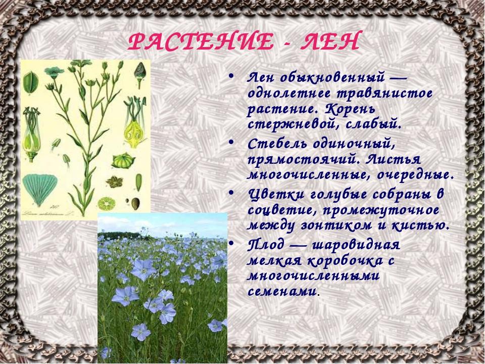 РАСТЕНИЕ - ЛЕН Лен обыкновенный — однолетнее травянистое растение. Корень сте...