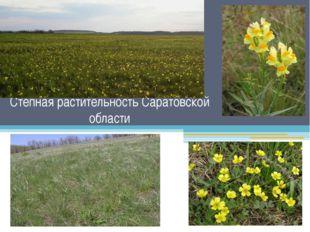 Степная растительность Саратовской области