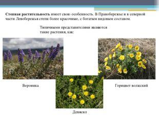 Степная растительность имеет свою особенность. В Правобережье и в северной ча