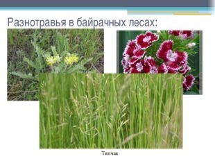 Разнотравья в байрачных лесах: Астрагал Гвоздика Типчак