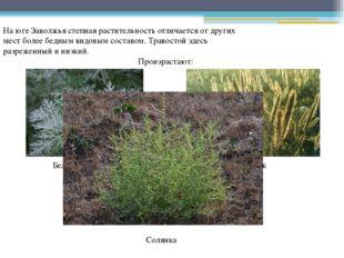 На юге Заволжья степная растительность отличается от других мест более бедным