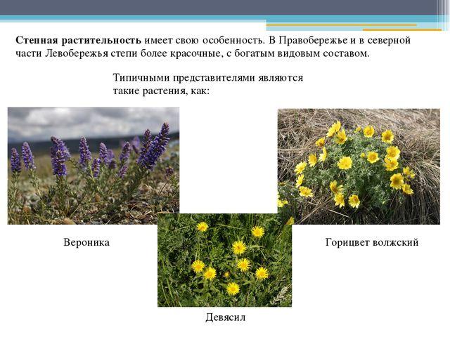Степная растительность имеет свою особенность. В Правобережье и в северной ча...