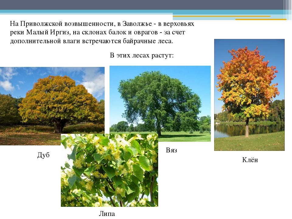 На Приволжской возвышенности, в Заволжье - в верховьях реки Малый Иргиз, на с...