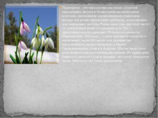Первоцветы – это многолетние растения с розеткой прикорневых листьев и безлис
