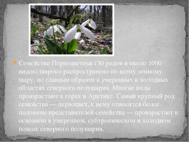 Семейство Первоцветные (30 родов и около 1000 видов) широко распространено по...