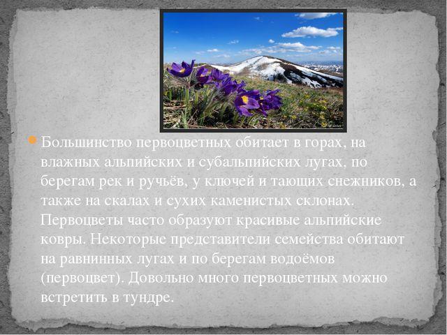 Большинство первоцветных обитает в горах, на влажных альпийских и субальпийск...