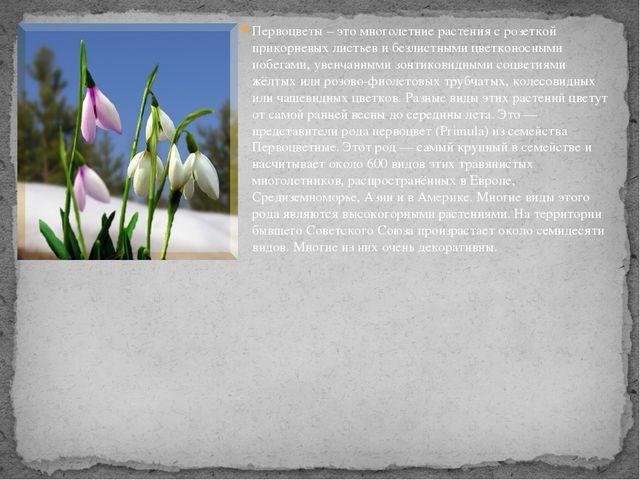 Первоцветы – это многолетние растения с розеткой прикорневых листьев и безлис...