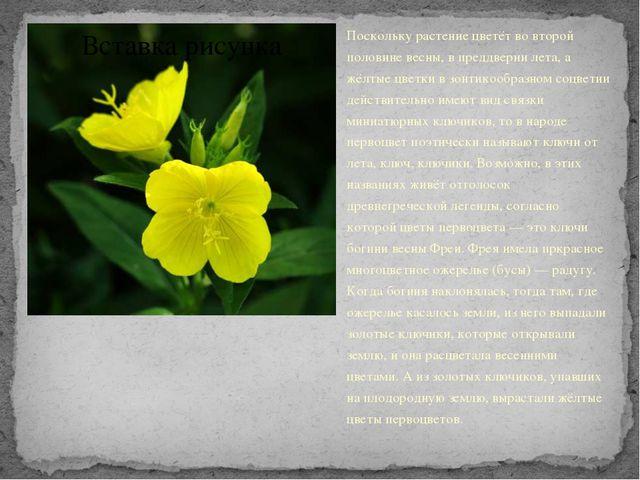 Поскольку растение цветёт во второй половине весны, в преддверии лета, а жёлт...
