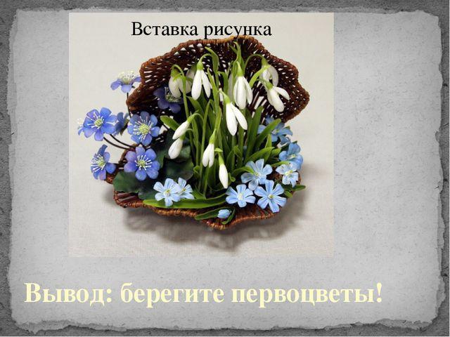 Вывод: берегите первоцветы!